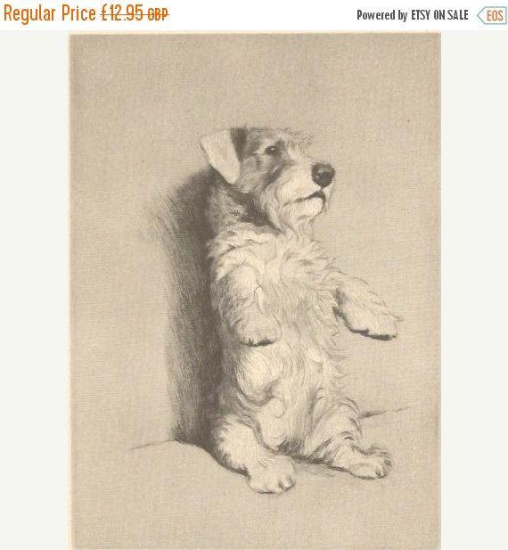 SALE CECIL ALDIN Print. The Sealyham. Vintage Print. Vintage Bookplate. Dog Print.