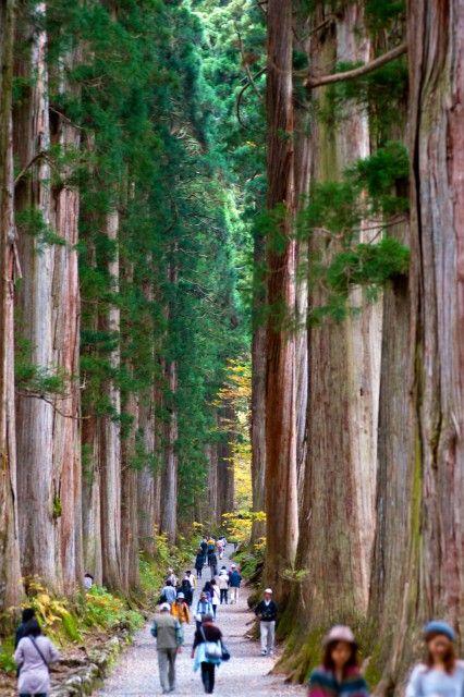 結界の森(長野・戸隠・戸隠神社) Nagano Japan Togakuji Shrine/Forest
