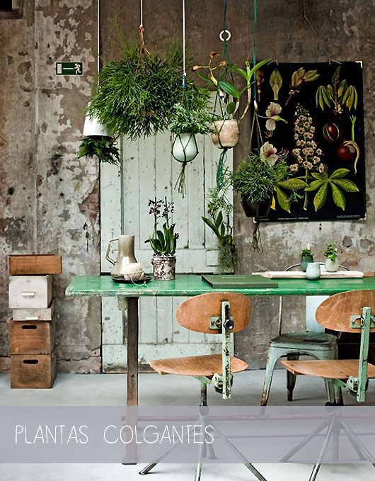 Plantas Colgantes Via Miblog Blog Pinterest
