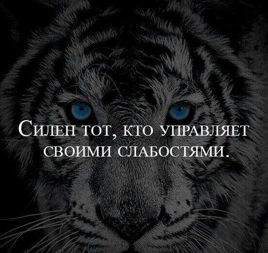 Статусы с рисунком тигра