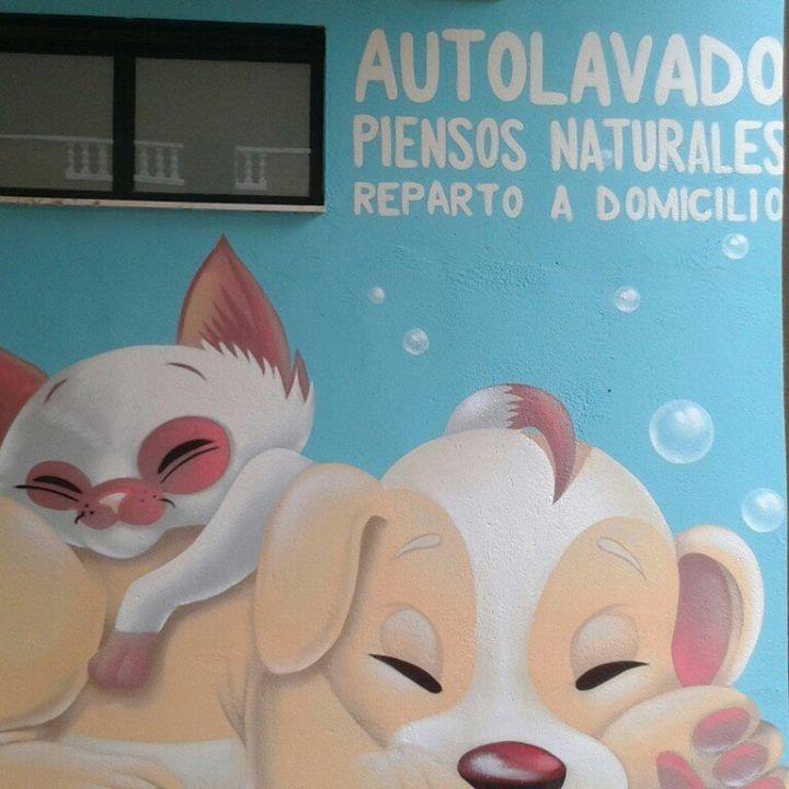 Mascotinas Cáceres - Peluquería Canina - Tienda Para Mascotas