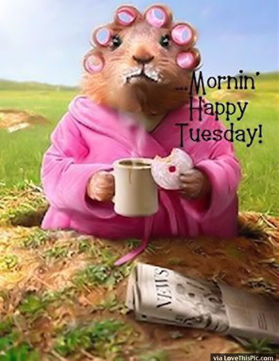 223 best HAPPY TUESDAY images on Pinterest | Happy tuesday ...