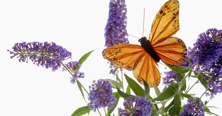 Ideias de borboletas artesanais para presente. Faça à mão presentes com a temática de borboleta para o Dia das Mães, aniversários e casamentos. Use imagens de borboletas de vários tamanhos. Use carimbos com imagens de borboletas, variadas tintas e técnicas de relevo. Corte borboletas coloridas de tecido para projetos de decoupagem. Decore potes de argila com pedaços de mosaico para criar ...