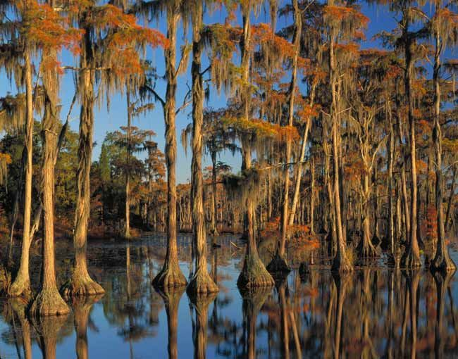 List Names Southeast's 10 Most Threatened Places | LiveScience