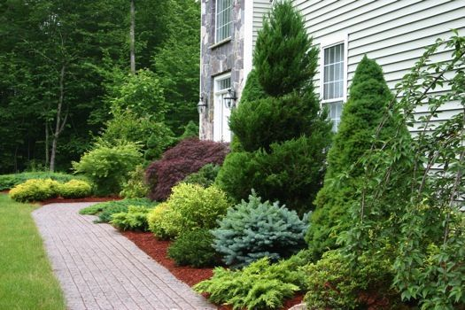 Evergreen foundation planting via ir landscape and design for Plants for landscaping around house