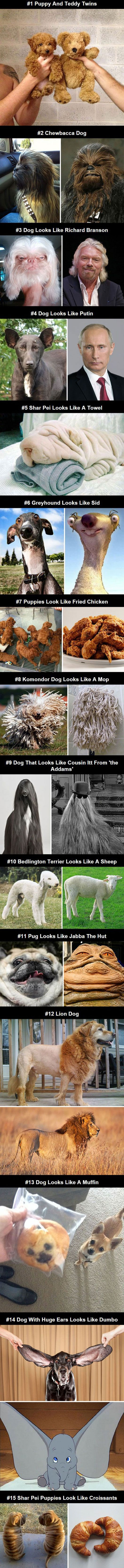 Dogs that look like other things.