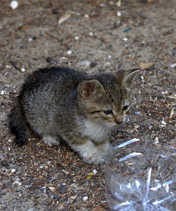 Kitten spring 2017