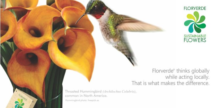 Floverde Sustainable Flowers, flowers that make the difference!