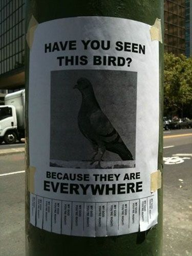 so true..! Or in Cape Town's case: SEAGULLS!