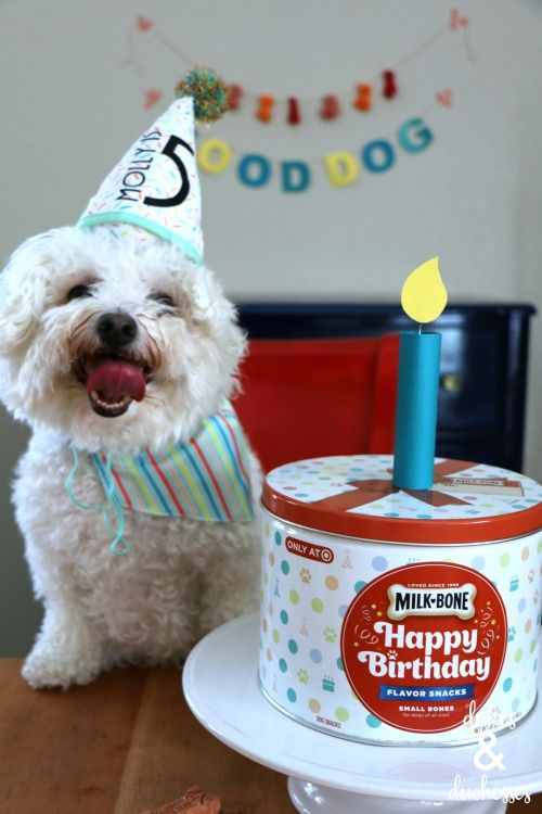 How To Have A Dog Birthday Party