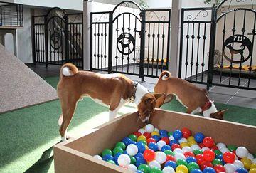 Školka pro psy - hotelové herny