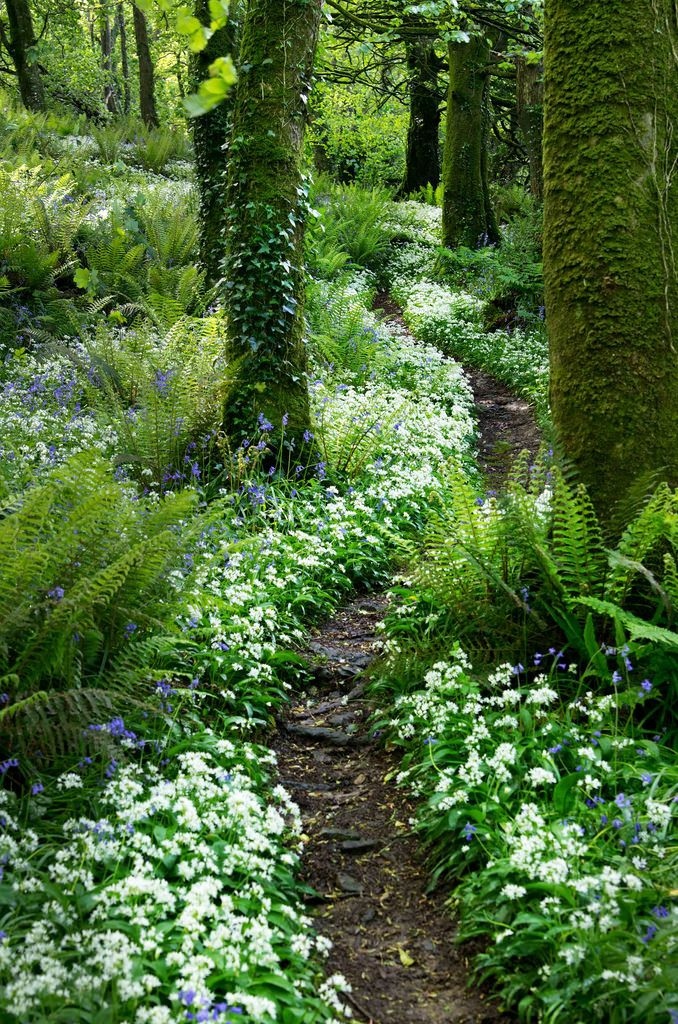 What a pretty trail to walk through! Look at all those flowers <3 ~ Courtmacsherry woods - West Cork, Ireland