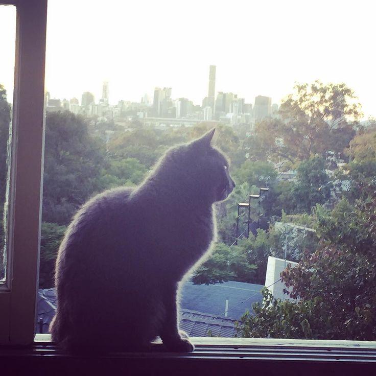 happy #Brisbane #cat in #Paddington  #brisbaneyb12 #yb12brisbane #visitbrisbane #brisbanephotographer #brisbaneweddingphotographer #brisbanecafe #brisbanecoffee #brisbaneanyday #bne #brisvegas #instabrisbane