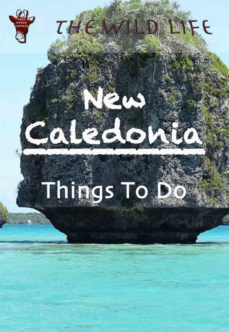 Things To Do In New Caledonia | THE WILD LIFE | If you have always wanted to visit France, but Europe is too far, visit these islands of France in the southwest Pacific Ocean. New Caledonia things to do, New Caledonia Activities and all you need to know about Holidays in New Caledonia with nature and wildlife parks for world nomads. #newcaledonia #southpacificislands #newcaledoniatourism