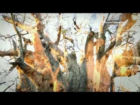 Tree Stories - The Upside Down Tree - YouTube