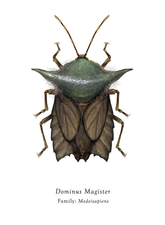 Star Wars Insects Insects Star Wars Characters Insect Art