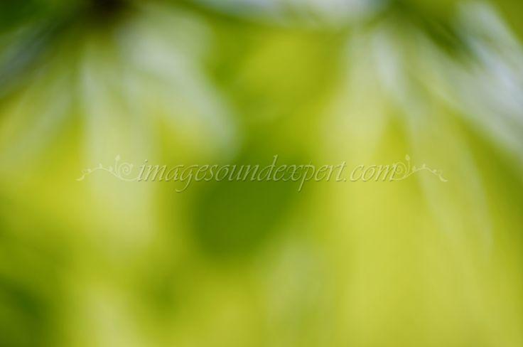 green spring blur foliage  background