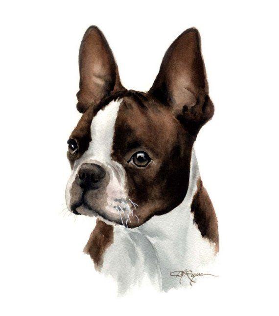 BOSTON TERRIER Dog Art Print Signed by Artist DJ Rogers on Etsy, $12.50
