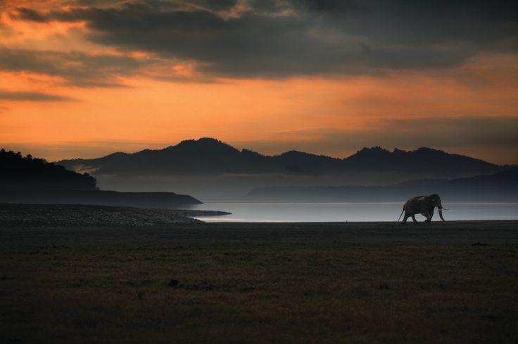 Wildlife conservation.