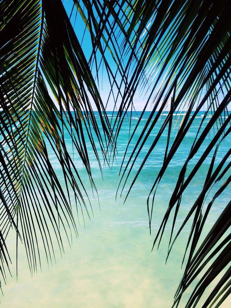 palm tree on the beach #LuceaRow                              …