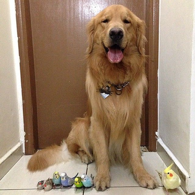 Lovable Dog Lives Harmoniously With 8 Birds And A Hamster Unusual AnimalsUnusual