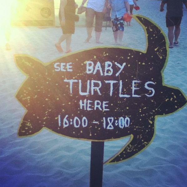 See baby turtles here! - Boa Vista #CaboVerde #Kaapverdie