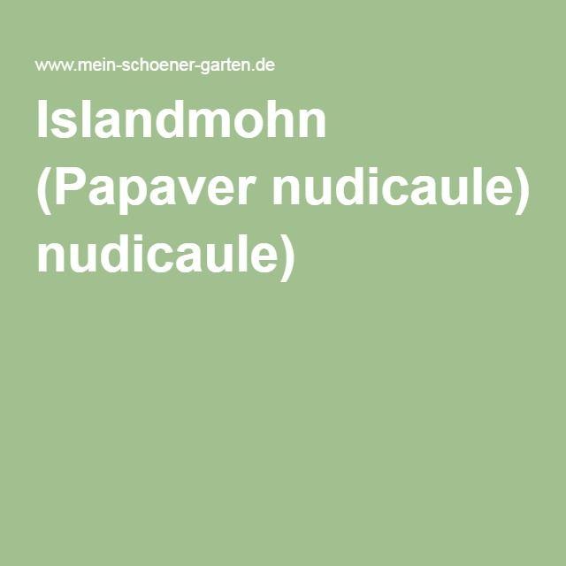 Islandmohn (Papaver nudicaule)