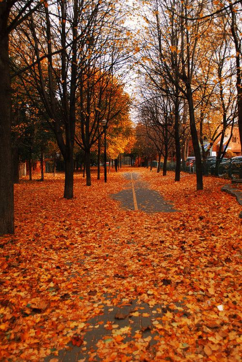 Autumn Path, Montreal, Canada