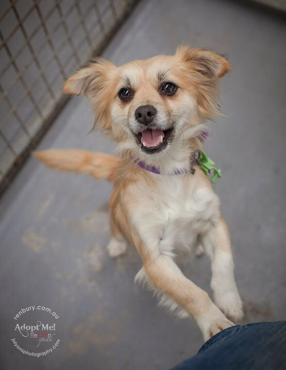 OK, so we've just found out that young Mikey was actually adopted late this afternoon.... but his little bouncy pen-mate Cyber is still available to adopt! She's a gorgeous bouncy little 3 year old girl \u003C3