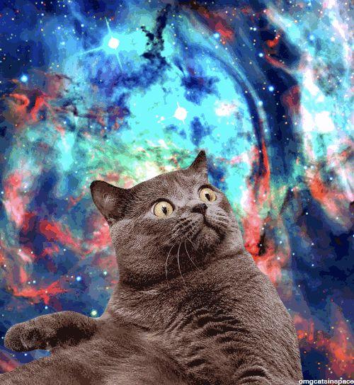 Surprised Spacecat is Surprised