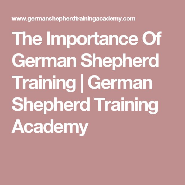 The Importance Of German Shepherd Training | German Shepherd Training Academy