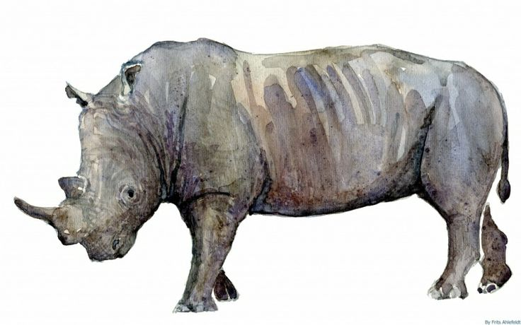 Rhino Watercolor Endangered Animals In Watercolor