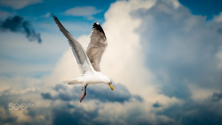 The seagull who looks furthest, flies highest. So I use my wings to fly under the firmament, with a seemingly endless sea of emptiness around me. I am alone but free and can reach as far as I want, as far as the eye can see.
