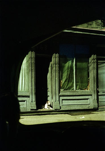 Dog in the doorway by Saul Leiter, American photographer and painter Mais