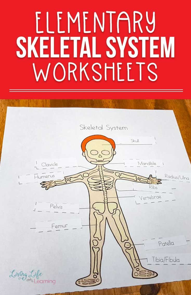 Skeletal System Worksheets For Kids Skeletal System Worksheet Biology For Kids Kindergarten Worksheets [ 1135 x 735 Pixel ]