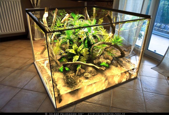 Island Paludarium 360° - DIY Creation