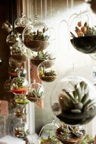 Beautiful window of hanging terrariums! This would be so so cool to make!