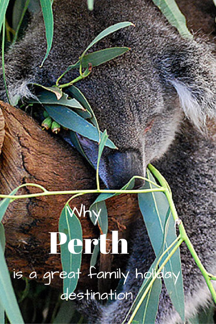 Perth is a fantastic family holiday destination. See why: http://happygokl.com/perth-with-toddlers/