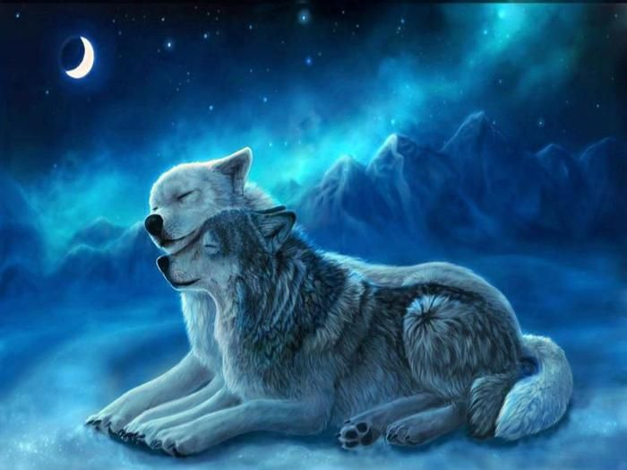 10 Best images about Wolves on Pinterest | Wolf love ...