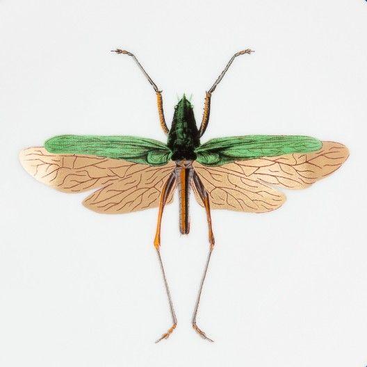 Daandi.com : assiette porcelaine Haut de Gamme Histoire Naturelle de Animal Fabuleux, motif insecte 2, fabriquée à la main en France