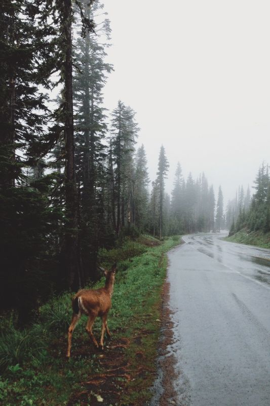 Rainy road with deer