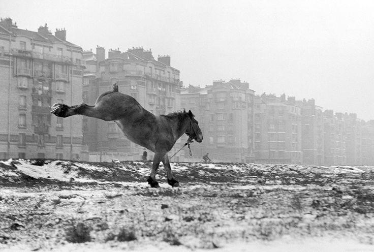 Cheval, porte de Vanves, Paris, 1952