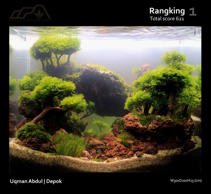 261 Best Images About Aquarium Scapes On Pinterest