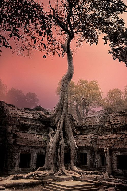 Fascinating!  Cambodia - Angkor Wat  From earth-witch on Tumblr:  Photographer: Roman Riabtcev