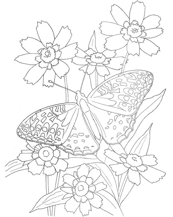 Butterfly and flowers Coloring pages and Printables