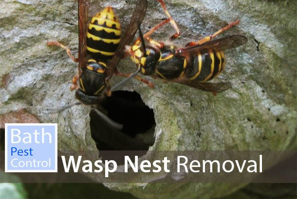 Bath Wasp Control | Same Day Wasp Nest Removal | City of Bath