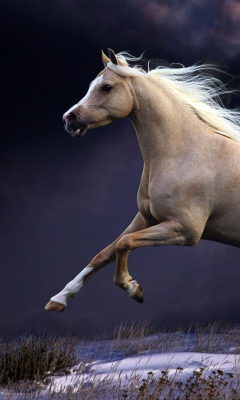 480x800 Wallpaper horse, mane, running, beautiful, night, sky
