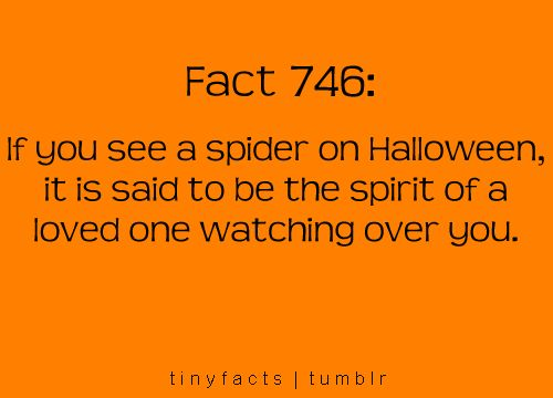 Hmm I didn't know this and as bad as I hate spiders I will start to look for one on Halloween...