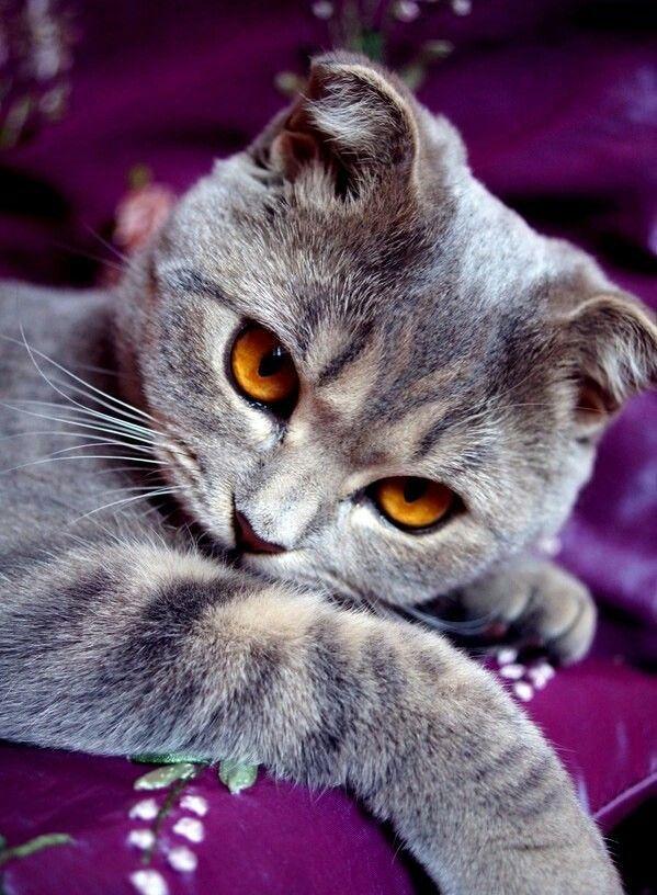 Кошечка фото картинки