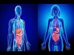Resultado de imagen para sistema digestivo humano 3d con nombres